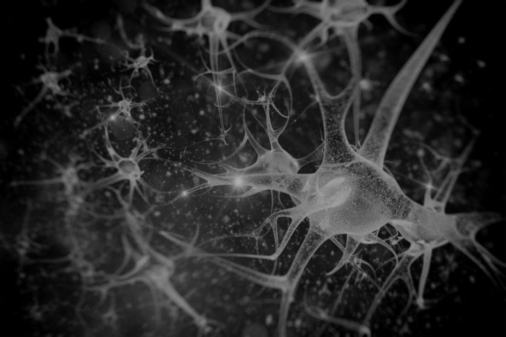 système nerveux central et périphérique